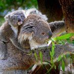 オーストラリアのクレジットカード事情 使用上の注意点と使える国際ブランド、おすすめカード